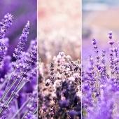 """Czy są tutaj miłośnicy lawendy? My nie potrafimy doczekać się jej zapachu - ale patrząc na taką osłonę, z pewnością """"poczujesz"""" jej zapach 🥰 Nowe 3 projekty na https://www.deaoslony.pl/25-kwiaty-i-krzewy"""
